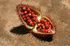 Annato - kryddan turnerar, Zanzibar Arkivfoton