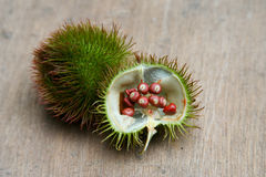 Annatto Pods Stock Photography
