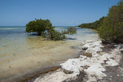 Anne`s beach, The Keys, Florida Royalty Free Stock Photography
