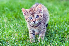 Annealed kitten Stock Photos