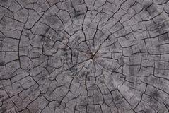 Anneau d'arbre Photos libres de droits