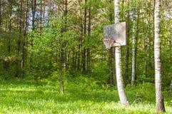 Anneau de basket-ball accrochant sur l'arbre de bouleau dans la forêt lithuanienne Image stock