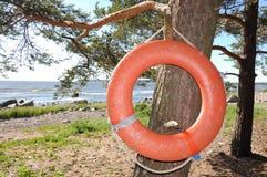 Anneau de bouée de sauvetage sur l'arbre Image stock