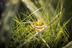 Anneau de mariage sur l'herbe Image stock