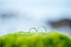 Anneau de mariage sur le vert avec le fond de plage Photographie stock libre de droits
