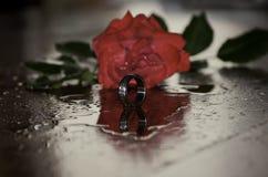 Anneau de Rose rouge et d'argent Images stock