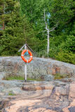 Anneau de vie sur un rivage rocheux Photo libre de droits