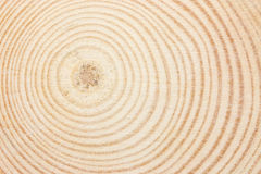 Anneau en bois Image libre de droits