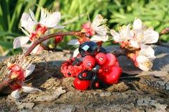 Anneau en verre fait main avec la fleur d'abricot Photographie stock