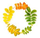 Anneau fait à partir des feuilles d'automne sur le fond blanc Photos stock