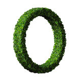 Anneau fait à partir des feuilles vertes Photos libres de droits