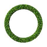 Anneau fait à partir des feuilles vertes Photos stock
