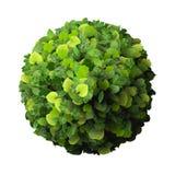 Anneau fait à partir des feuilles vertes Photo libre de droits