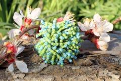 Anneau fait main en verre bleu et vert avec la fleur d'abricot Images stock