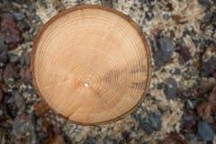 Anneaux annuels d'un petit tronc d'arbre scié Photographie stock libre de droits