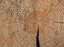 Anneaux annuels sur réduits les arbres photographie stock