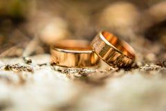 Anneaux d'or, anneaux de mariage, anneaux, deux anneaux, fourmis, fourmis sur les anneaux, Images stock