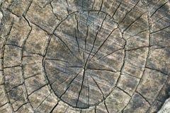 Anneaux d'arbre texturisés en bois âgés approximatifs Photo libre de droits