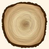 Anneaux d'arbre, tronçon coupé Photo libre de droits