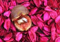 Anneaux d'or et d'argent de mariage dans la figue, concept d'amour Photographie stock libre de droits