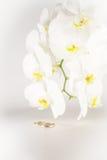 Anneaux d'orchidée et de mariage Image libre de droits