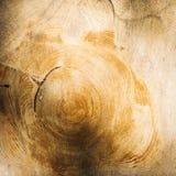 Anneaux de croissance d'arbre Photos stock
