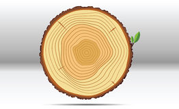 Anneaux de croissance d'arbre en bois Photo stock