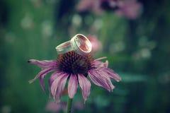 Anneaux de mariage de éclairage sur une fleur images libres de droits