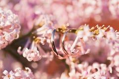 Anneaux de mariage dans le rose lilas doux Photographie stock libre de droits