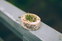 Anneaux de mariage dans une boîte en bois Image stock