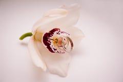 Anneaux de mariage des jeunes mariés sur une orchidée Photo libre de droits