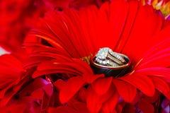 Anneaux de mariage et fleurs rouges Photo stock