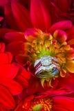 Anneaux de mariage et fleurs rouges Image stock