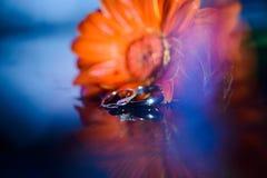 Anneaux de mariage fond, fleur Image stock