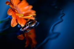 Anneaux de mariage fond, fleur Photographie stock libre de droits
