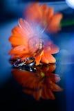 Anneaux de mariage fond, fleur Photo libre de droits