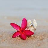 Anneaux de mariage mis sur la plage Photo stock
