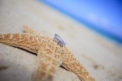 Anneaux de mariage sur des étoiles de mer images libres de droits