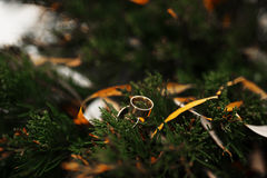 Anneaux de mariage sur des aiguilles de pin au jour d'hiver image libre de droits