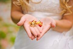 Anneaux de mariage sur des baies de cendre de montagne Image stock