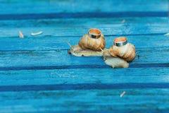 Anneaux de mariage sur des escargots Photographie stock libre de droits