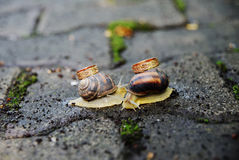 Anneaux de mariage sur des escargots Baiser d'escargots Photos stock