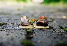 Anneaux de mariage sur des escargots Baiser d'escargots Image stock