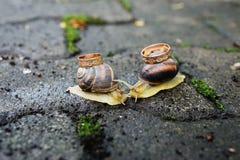 Anneaux de mariage sur des escargots Baiser d'escargots Photo libre de droits