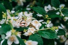 Anneaux de mariage sur des fleurs de jasmin Photographie stock libre de droits