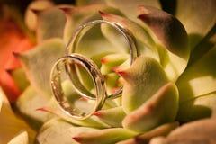 Anneaux de mariage sur des succulents image stock