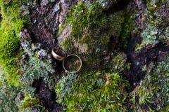 Anneaux de mariage sur le fond de la forêt Photographie stock libre de droits