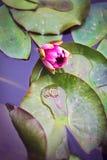 Anneaux de mariage sur un lotus photographie stock libre de droits