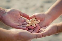Anneaux de mariage sur une étoile de mer dans des mains du marié et de la jeune mariée Photos libres de droits