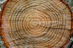 Anneaux de tronc d'arbre Images libres de droits